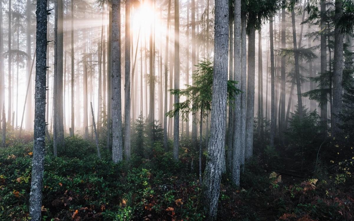 """""""sunlight through trees"""" by John Westrock on Unsplash"""